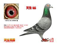 CHN12-02-508685