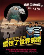 2014年11月22-23日廊坊鸽展