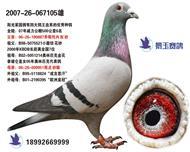 阳光家园4大鸽王血系