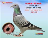 河南郑州信力公棚决赛奖鸽