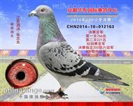 14年安徽华东国际公棚决赛亚军(以出售)