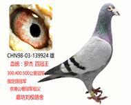 """""""四冠王""""罗杰家族超级种鸽"""