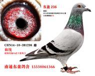 东盈236