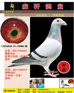 龙轩鸽业第一主血佛斯特拉原环―大铭鸽之系