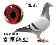 """B10-6148341""""飞燕"""""""
