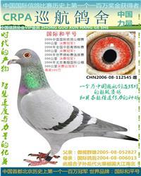 06年北京惠翔公棚决赛冠