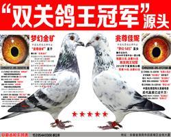 """苍白王牌""""梦幻145""""双关鸽王冠军"""
