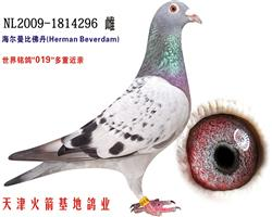 海尔曼-01