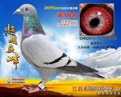 2015年徐州爱翔获奖鸽