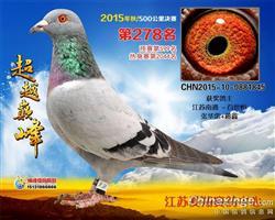 徐州爱翔奖鸽