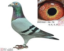 DV03661-06-76雄
