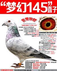 """兆尊馆王牌""""梦幻145""""直子【兆尊致胜】"""