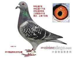 2012神木光宇首届决赛7名