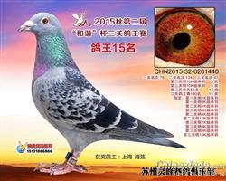 苏州灵峰俱乐部15年三关鸽王15名