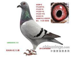 陕西神木光宇公棚2013年加强赛季军