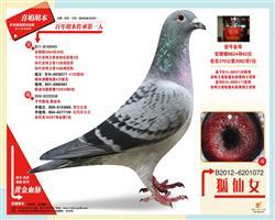 鸽王家族胡仙女