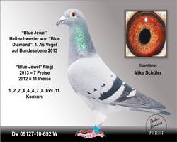 全德国鸽王总冠军的同父异母姐姐692