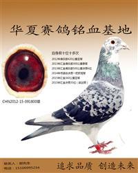 杨阿腾总冠军(非卖品)
