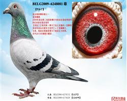 【阿拉丁】:09年波治全国总冠军!