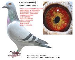 【超速时分】:14年铁鹰第三关冠军!
