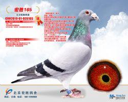 宏胜胡本165