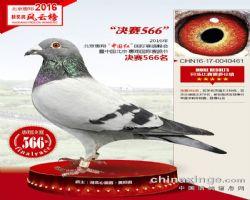 """北京惠翔""""中国红""""国际赛鸽峰会决赛566"""