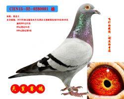 CHN15-32-0280091 雄