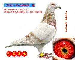 CHN15-32-0281862  雄