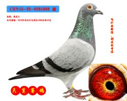 CHN15-32-0281868 雄