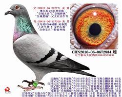 2016特留鸽