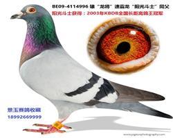 """03年KBDB全国长距冠军""""阳光斗士""""弟"""