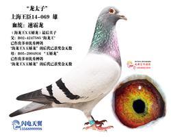 """上海王臣""""龙太子"""""""
