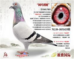 12年国际鸽王冠军-34000羽参评