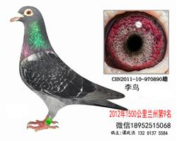 2012年1500公里l兰州第9名李鸟