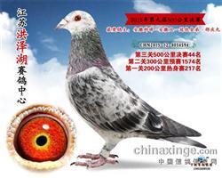 2015秋江苏洪泽湖决赛44名