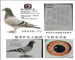 基础种鸽812