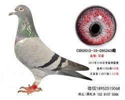 仅供欣赏超远程吴淞老国血兰州48