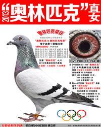 2013年奥林匹克直女【奥林匹克荣钰】