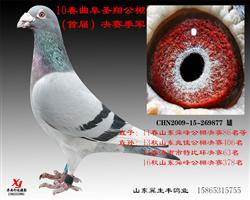 曲阜圣翔决赛3名(已售出)