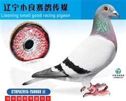 台湾明月集团狼狗号直孙女