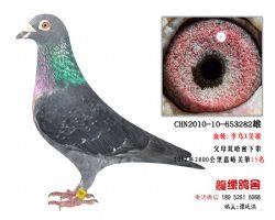 2012年2000公里15名老国血李鸟