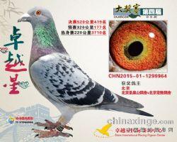 2015年北京卓越星公棚决赛419名