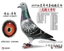 2017年山东舜峰俱乐部三关鸽王3名