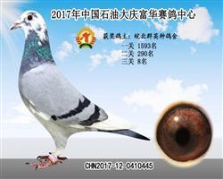 大庆富华公棚决赛8名