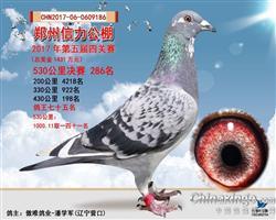 2017年郑州信力公棚决赛286名