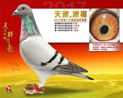 天津津福556公里加赛61名