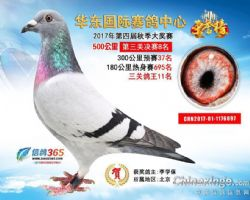 华东国际决赛8名预赛37名