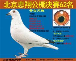 北京惠翔公棚决赛62名
