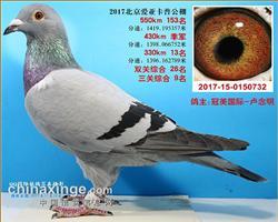 2017年北京爱亚卡普获奖鸽