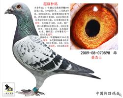 超级种鸽898